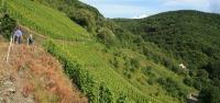 Apadrinar un viñedo