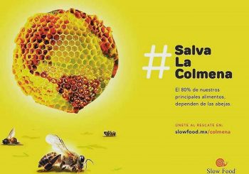 #SaveTheHive – Join the Bee Rescue Team with Slow Food Mexico