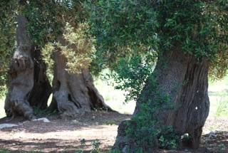 Aceite de oliva virgen extra: un nuevo Baluarte