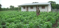 Découvrir la carte des jardins potagers en Afrique