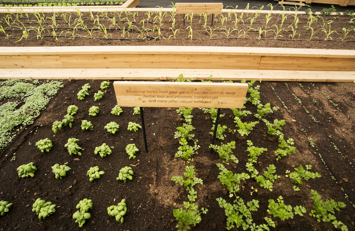 Making your own vegetable garden at home: seven tips from seed to harvest -  Slow Food International