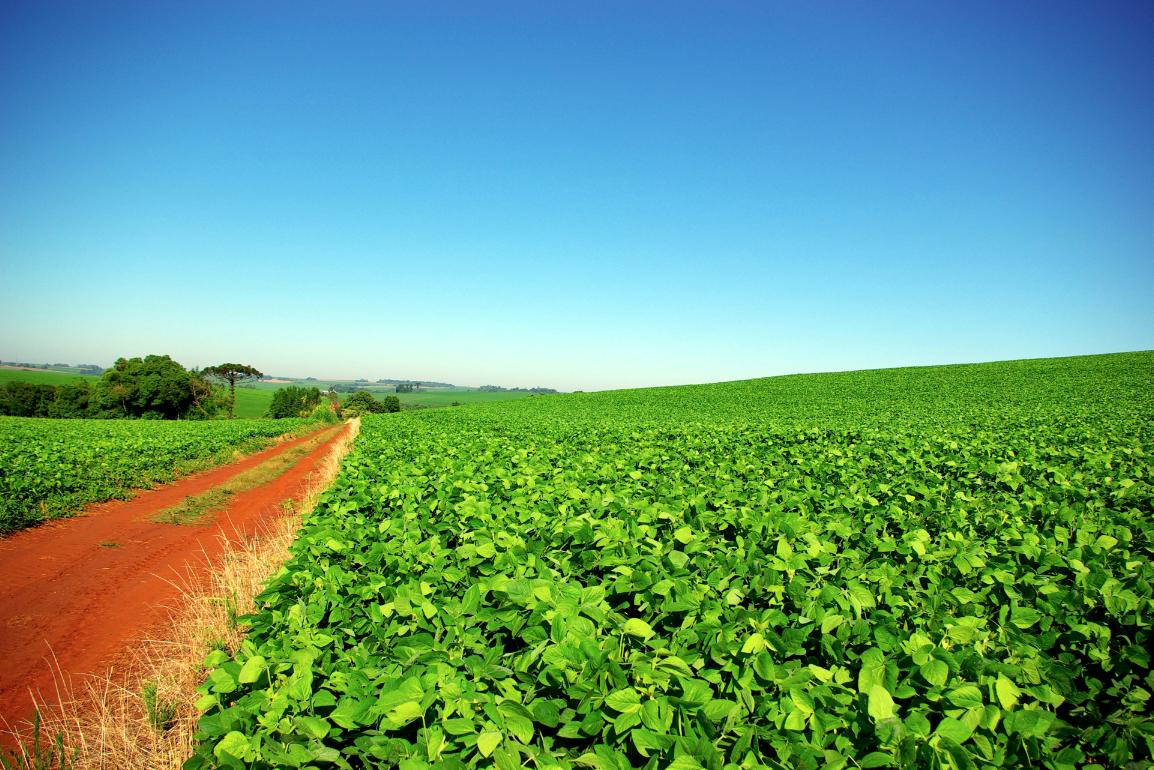 Fotos de granjas agricolas 76