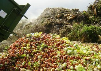 Italy Takes Action to Curb Food Waste