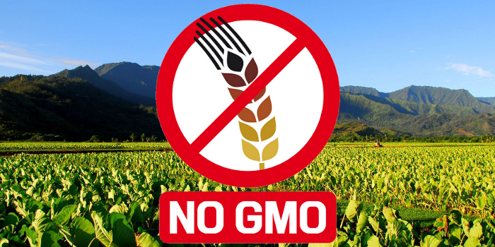 Slow Food supports the Monsanto Tribunal: sign the petition!