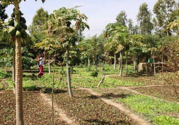 Burkina Faso against GM cotton