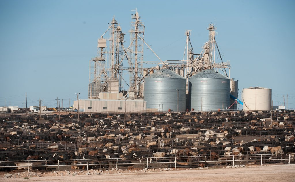 BWC5MJ Crowded beef cattle feedlot near Hereford in the panhandle area of Texas, USA