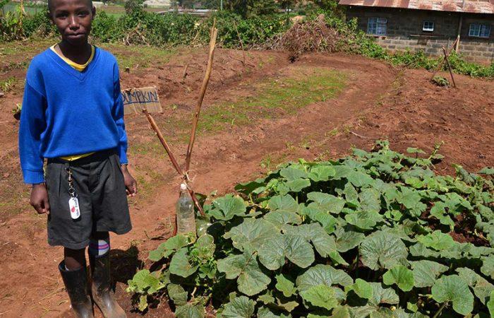 Kenya upholds ban on GMOs