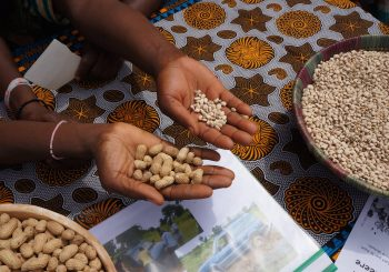 Africa comes to Burkina Faso for Terra Madre
