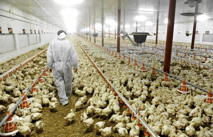 Chlorinated chicken and other marvels of modern American farming coming to the UK?