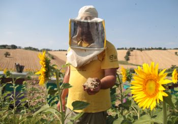 #Hunger4Bees: Declining Bee Populations Mean and Our Food