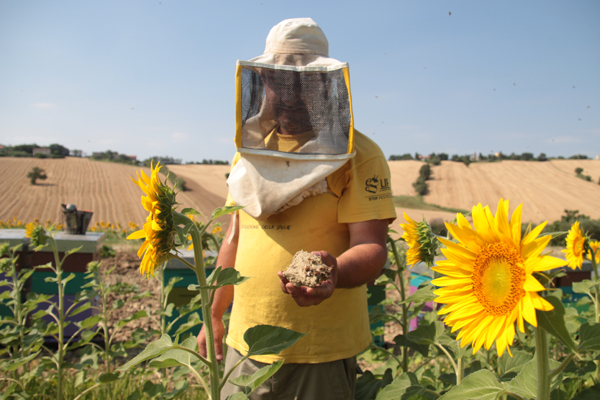 #Hunger4Bees: Declining Bee Populations and Our Food