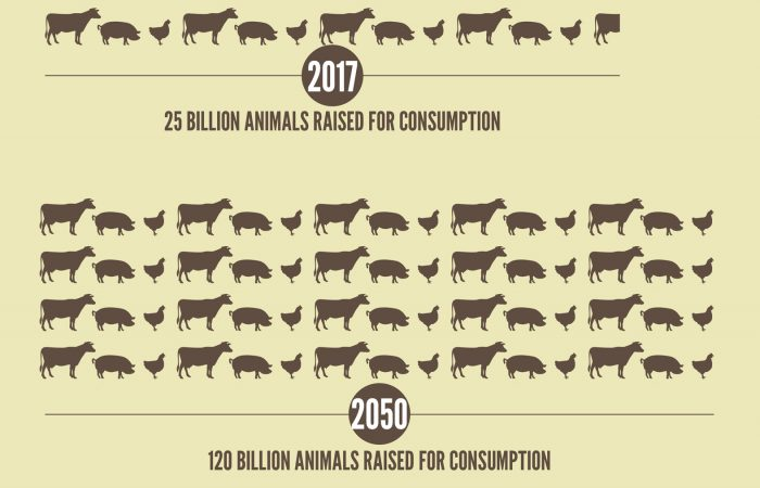 Industrial Meat Is Devouring the Planet