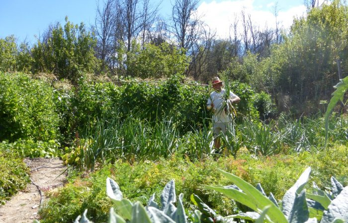 Spain: biodiversity protection relies on organic gardens