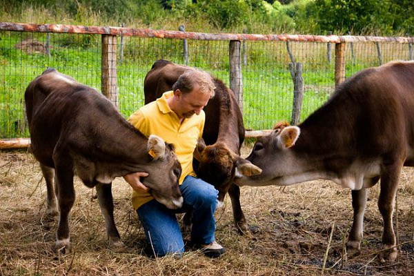 What's the Difference Between a Slow Food Presidium Cow and an Industrially-raised Cow?