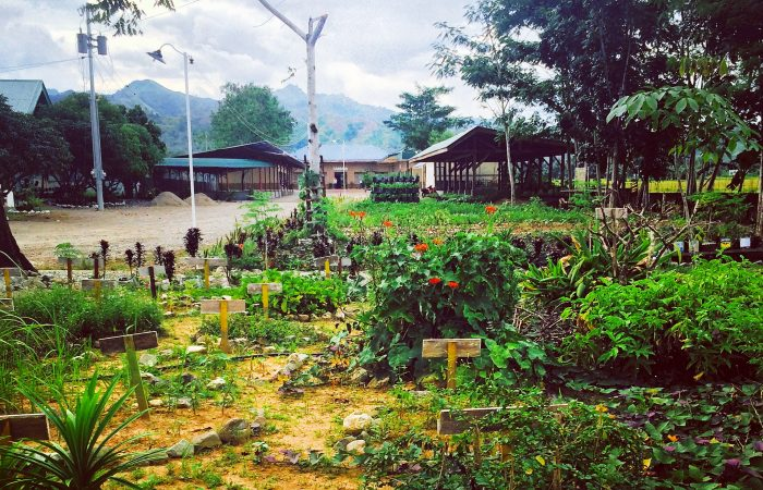 Dumingag: Transforming Communities Through Sustainable Agriculture