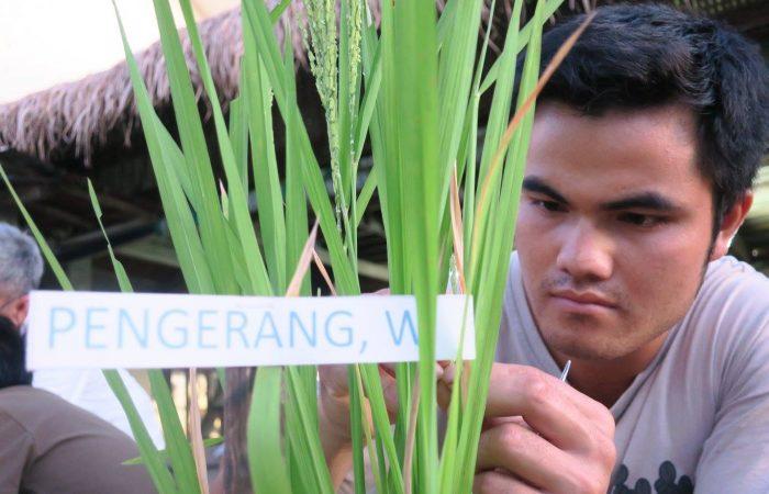 """Resisting the """"Green Revolution"""" in Visayas"""