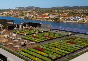 Reclaiming Our Cities, Starting From Food