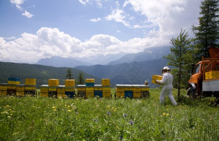 """""""Bee-Friendly"""" Insecticide Not Stopping Colony Collapse"""