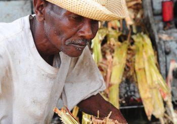 Traditional Haitian Clairin: the First Presidium in Haiti