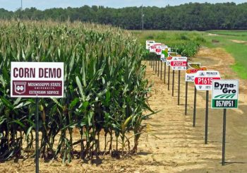 Are GMOs harmful? Yes, to our food sovereignty!