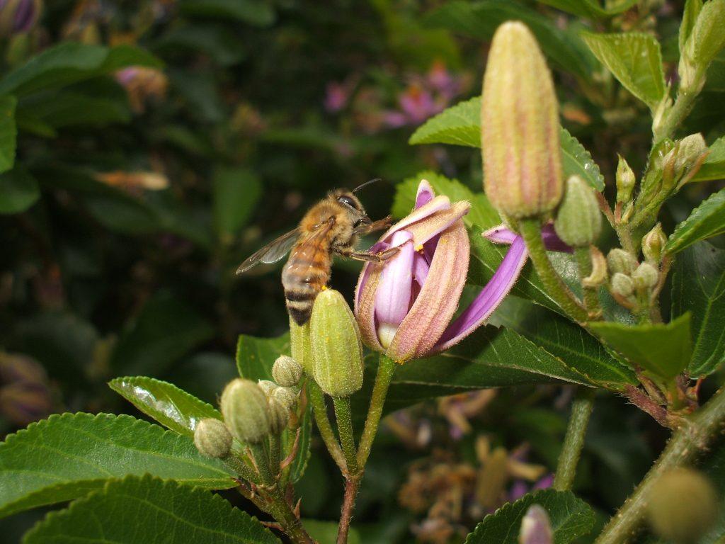 claudio-porrini-bees-neonicotinoids