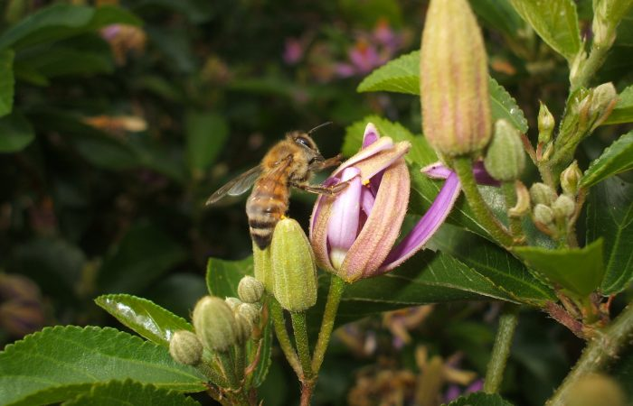 Pesticide Action Week: There is Always an Alternative