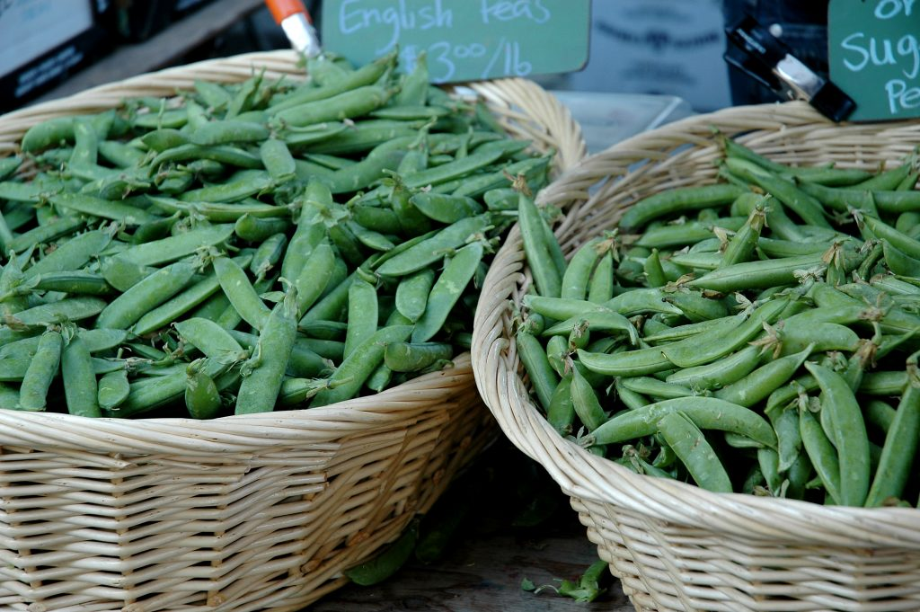 gardening-without-pesticides-organic-peas-beans