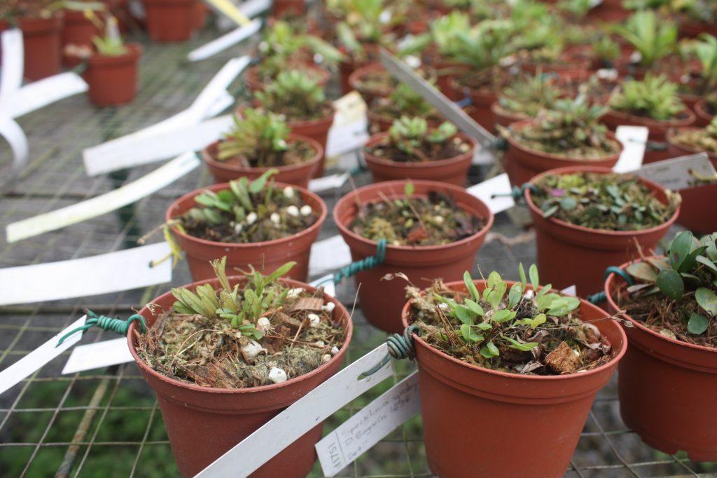 gardening-without-pesticides-pot-plants