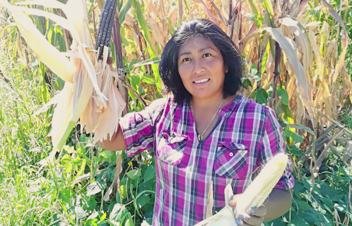 Migrant cuisine: Mayan Traditions from Garden to Table