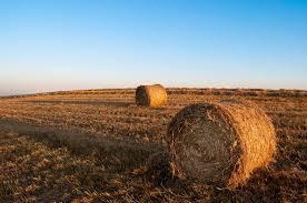 Slow Food quiere participar en la Política Agrícola Común en Europa