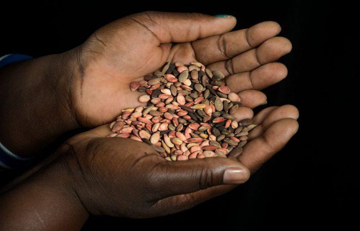 Food For Change – Todo Alimento Vem Das Sementes