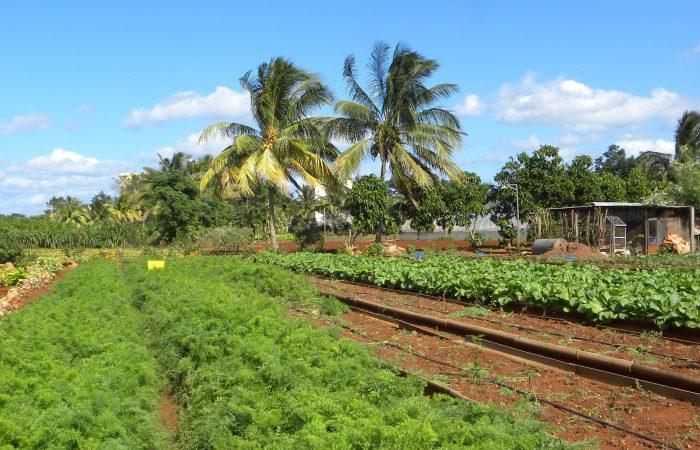 Finca Slow! The New Slow Food Cuba Project