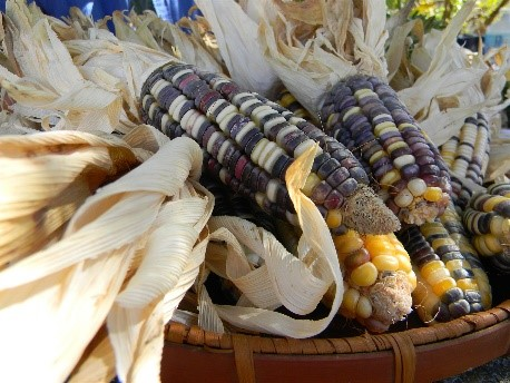 New Slow Food Presidia: South African Rainbow Maize and Rex Union Orange
