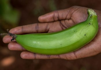 Slow Food in Uganda: Through a Filmmaker's Lens