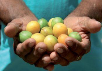 Fortalezas Slow Food da Bahia viajam à Itália para o maior encontro internacional dedicado ao alimento