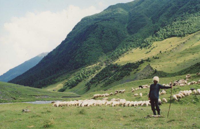 O Slow Food Se Une à Iniciativa de Cidadania Europeia para Acabar com as Gaiolas