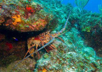 Slow Fish Caribe – a Community Across the Caribbean