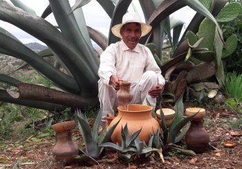 En México nació el nuevo Baluarte del Maguey de la Mixteca Oaxaqueña