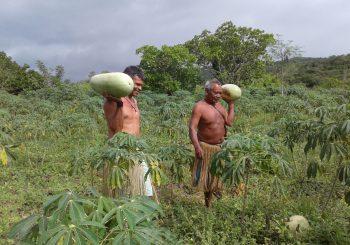 A nova Fortaleza de Farinha de Manioca Kirirí está nascendo no Brasil