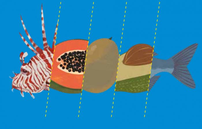 Slow Fish Caribe ha lanzado su campaña sobre Consumo Responsable en el archipiélago de San Andrés, Providencia y Santa Catalina