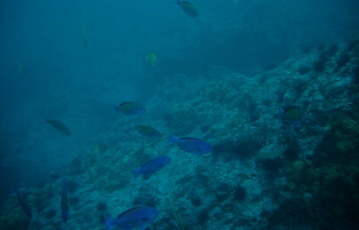 Slow Food Worried about Newly Adopted Decisions on Marine Environments
