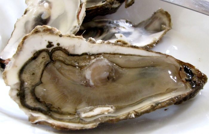 Thank a Farmer – Tifenn and Jean Noël Yvon: Breton Oyster Producers Battling the Seasons