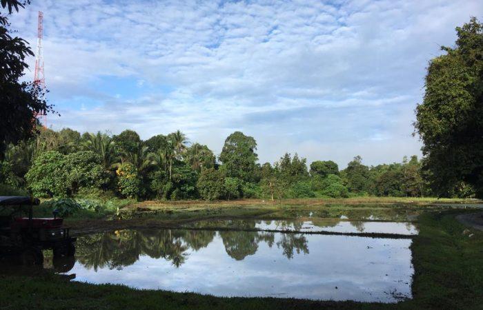 Tinker, Teacher, Soldier, SRI: The Farmer Leading the Way Towards Malaysia's Organic Future