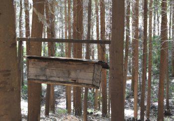 Ogiek Honey: The Precious Nectar Linking Tradition with the Future