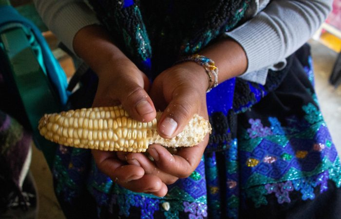 The Milpa System in Chiapas: A Bastion of Biodiversity