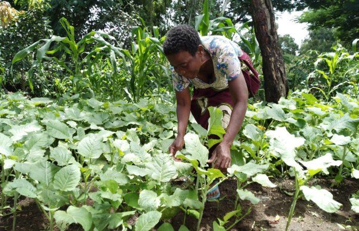 L'agroécologie, la clé du futur : développer les économies locales en Afrique de l'Est