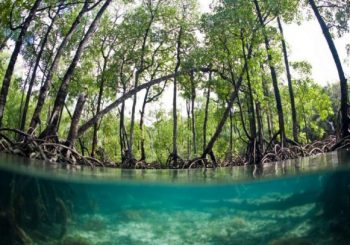 Mangrove: a threatened, living territory