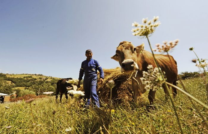 Uma luz de esperança para o bem-estar animal na Europa