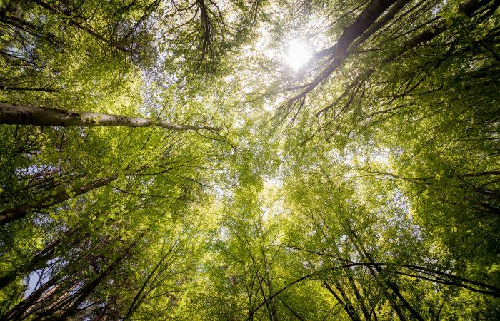 COVID-19: An Environmental Issue