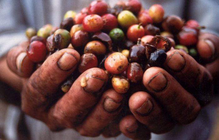 Comunidades Indigenas alrededor del mundo protegen biodiversidad
